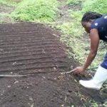 Une cultivatrice des légumes au Nord-Kivu CP: DR