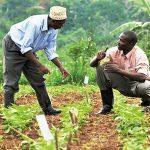 Les agronomes de Kasumbalesa plaident pour une assistance provinciale